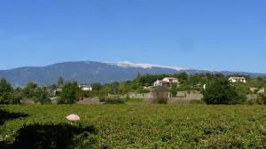 Mont Ventoux - Mormoiron - Vaucluse