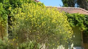 plant-de-genets